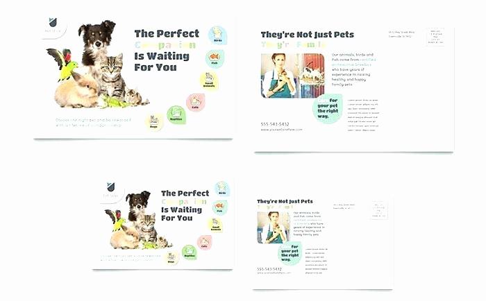 4 Per Page Postcard Template Lovely Microsoft Office Postcard Template – Btcromaniafo