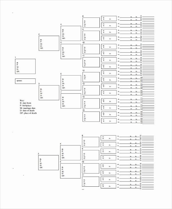 7 Generation Family Tree Template Elegant 9 Blank Family Tree Templates