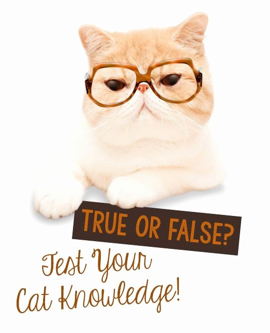 Create True or False Quiz Awesome True or False Test Your Cat Knowledge