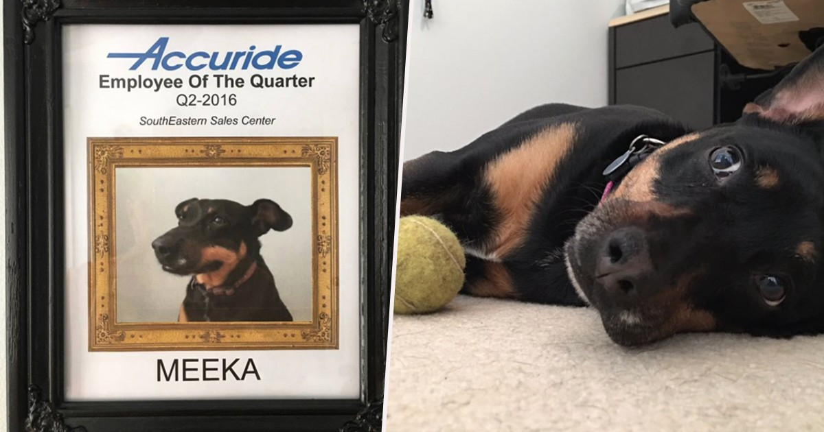 Employee Of the Quarter Certificate Fresh Dog Wins Every Single Best Employee Award at Sales Pany