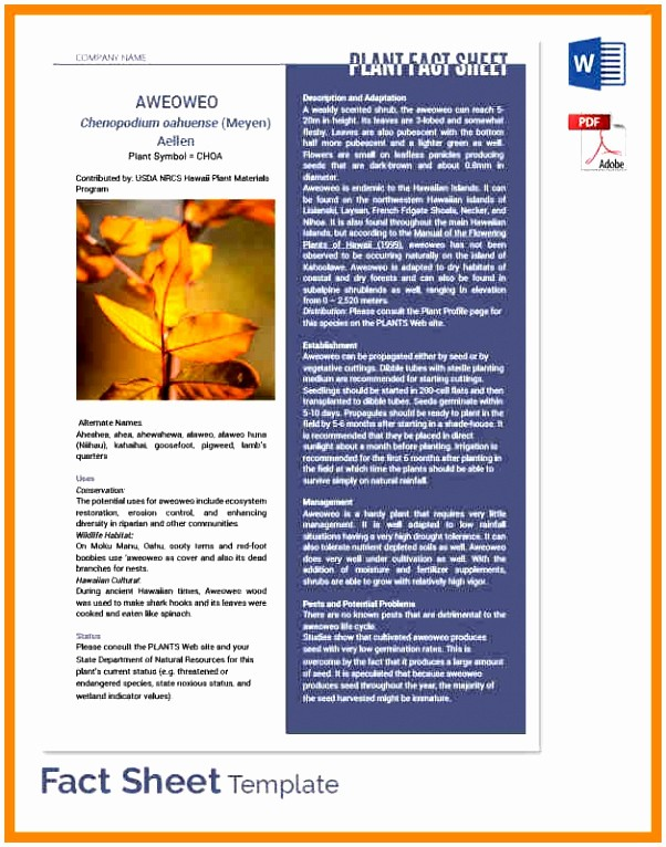 Fact Sheet Templates Microsoft Word Inspirational 7 Microsoft Word Fact Sheet Template Ooerr