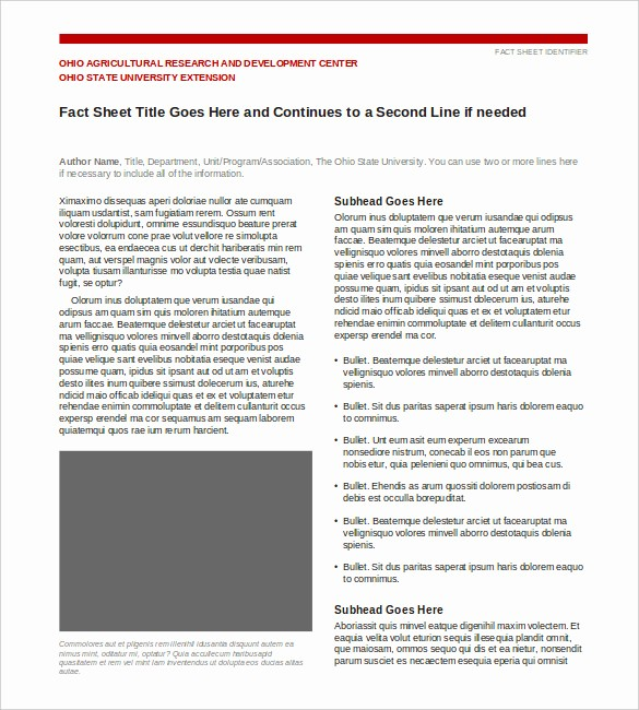 Fact Sheet Templates Microsoft Word Unique 24 Fact Sheet Templates Pdf Doc