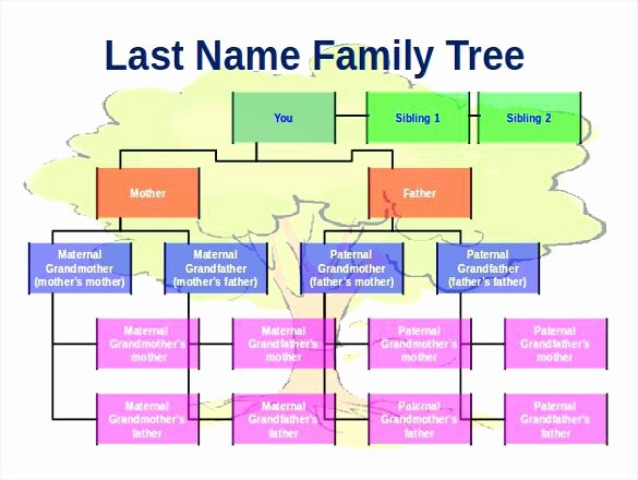 Family Tree Microsoft Word Template Lovely Family Tree Template Chart Pa Dutch Country Store Diagram