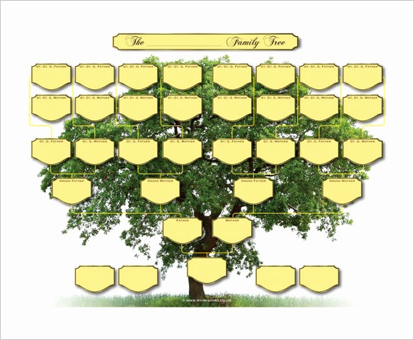 Family Tree Template 5 Generations Lovely Five Generation Family Tree Template – 11 Free Word