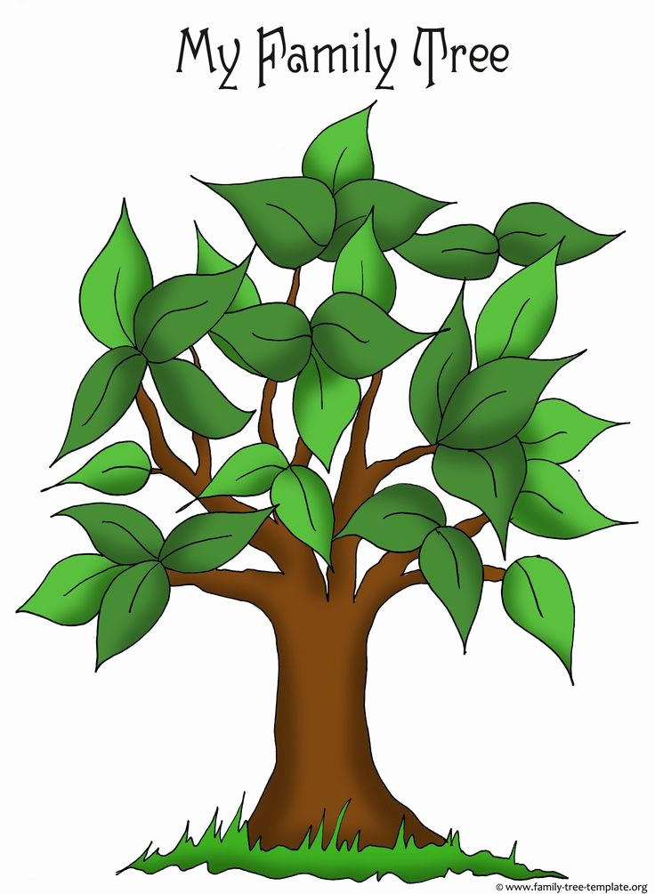 Family Tree Template for Mac Elegant 17 Best Ideas About Tree Templates On Pinterest