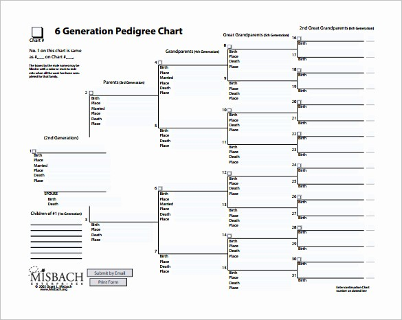 Fillable 6 Generation Family Tree Elegant Blank Pedigree Chart Template Blank Ancestry Charts