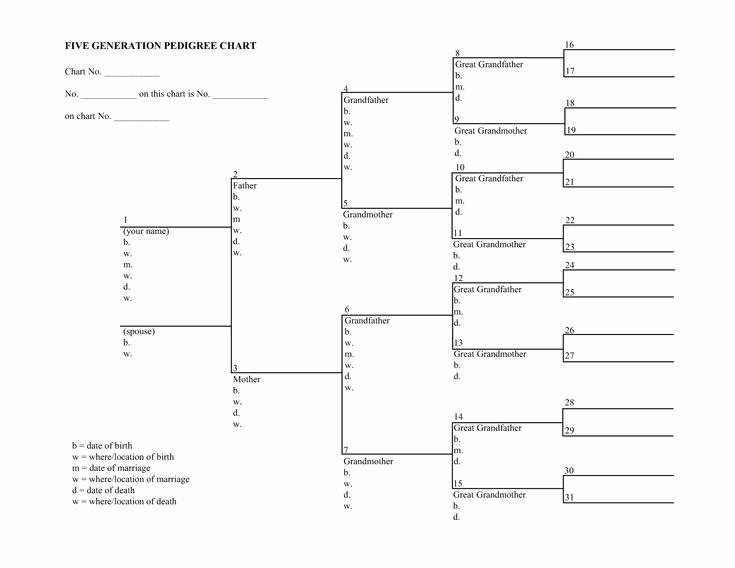 Fillable 6 Generation Family Tree Unique Blank Family Tree Charts
