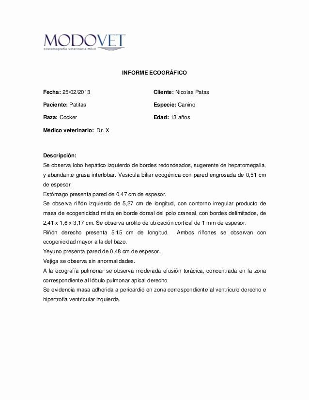 Formato De Un Informe Simple New Informe Ecográfico Ejemplo