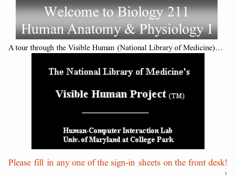 Front Desk Sign In Sheet Lovely Wel E to Biology 211 Human Anatomy & Physiology I Ppt