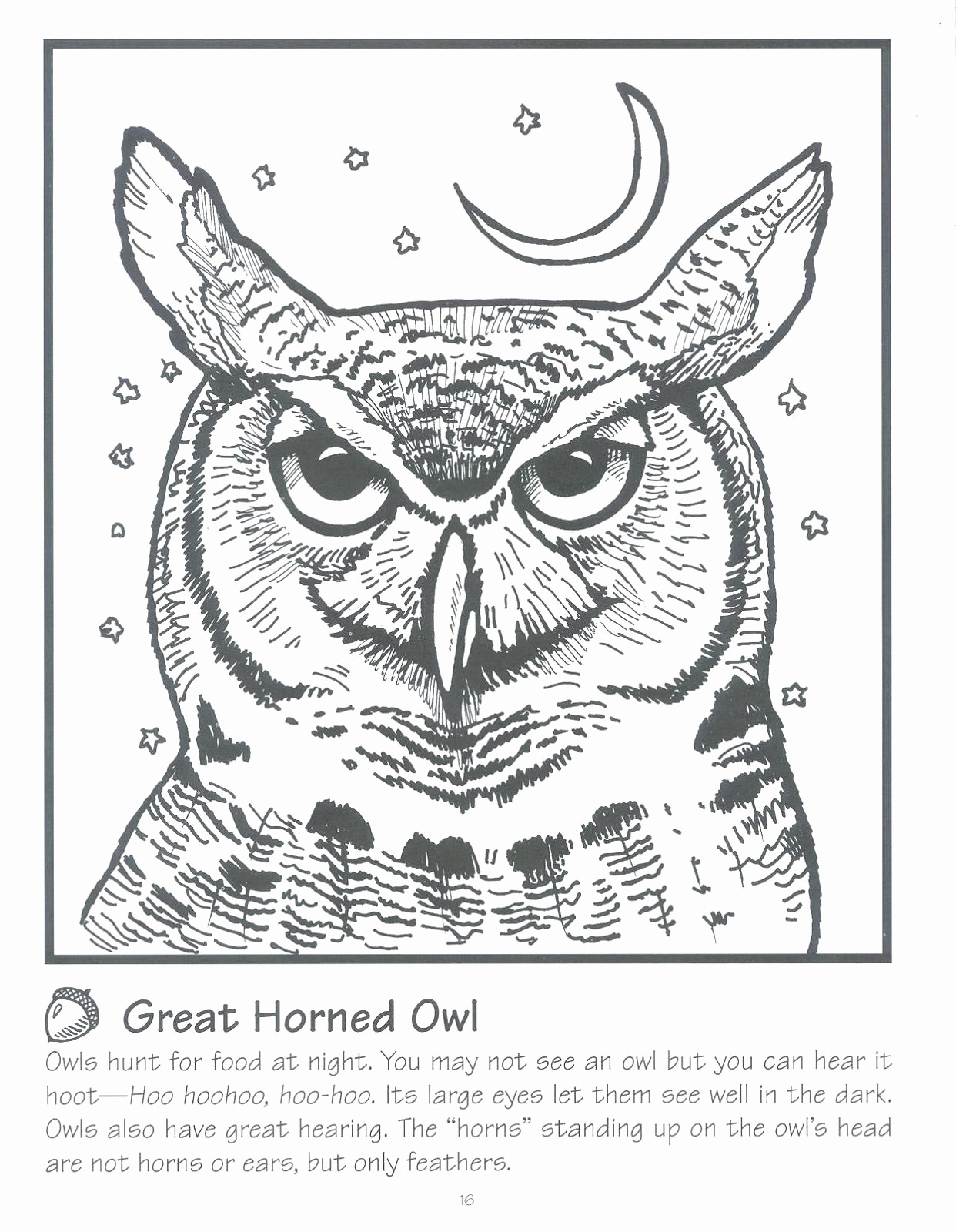 Live Com Sign In Page Inspirational Perfect Great Horned Owl Coloring Page Free Printable