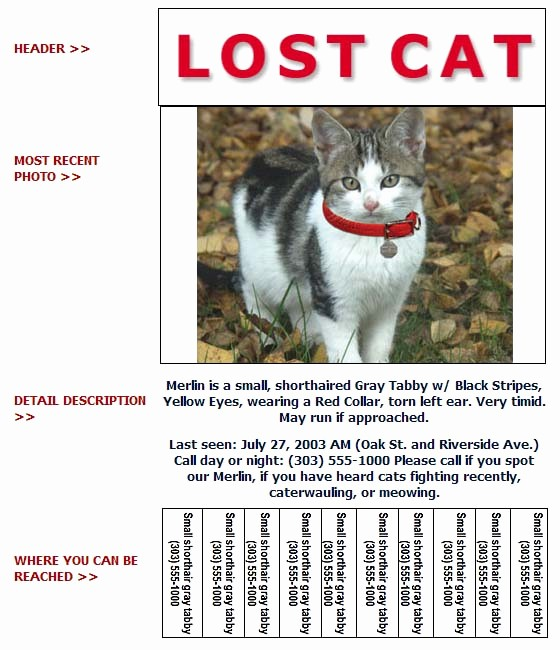 Lost and Found Sign Template Beautiful Lost Cat Poster Template Gallery