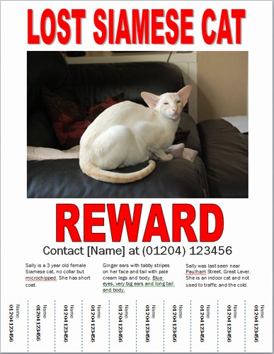 Lost and Found Sign Template Elegant Missing Cat Poster How to Make A Lost Cat Poster