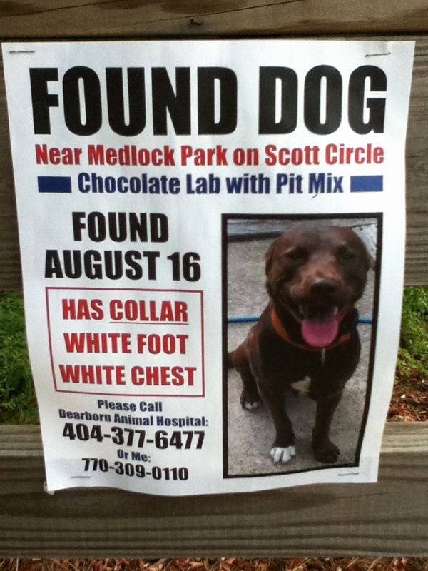 Lost and Found Sign Template Inspirational 9 Best Of Found Dog Flyer Found Dog Flyer