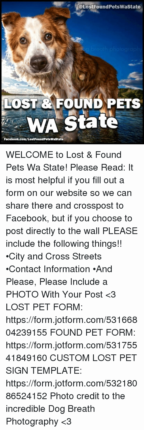 Lost and Found Sign Template Luxury Lost & Found Pets Wa State Lostfound