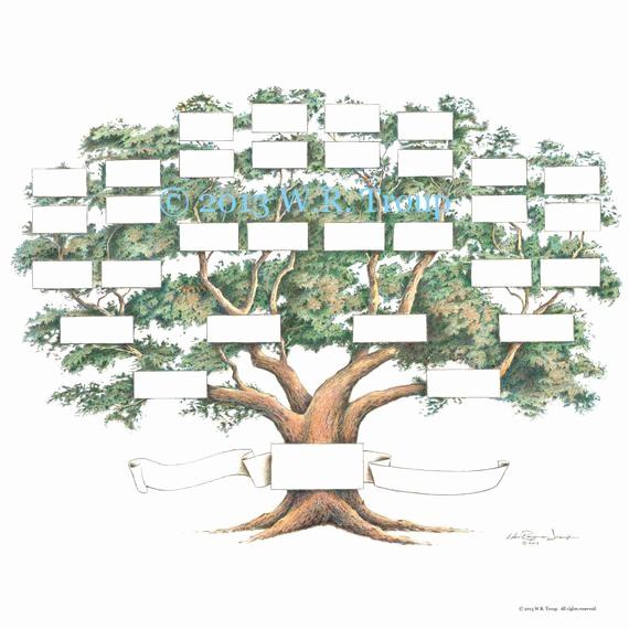 Make A Family Tree Chart Inspirational Family Tree Scrapbook Chart 12x12 Inch 5 6 Generations