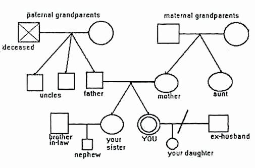 Make A Kinship Diagram Online Elegant Kinship Chart Template – Eyeswideopenfo