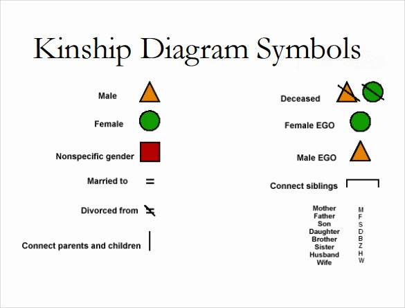 Make A Kinship Diagram Online Luxury 10 Kinship Diagram Templates to Download