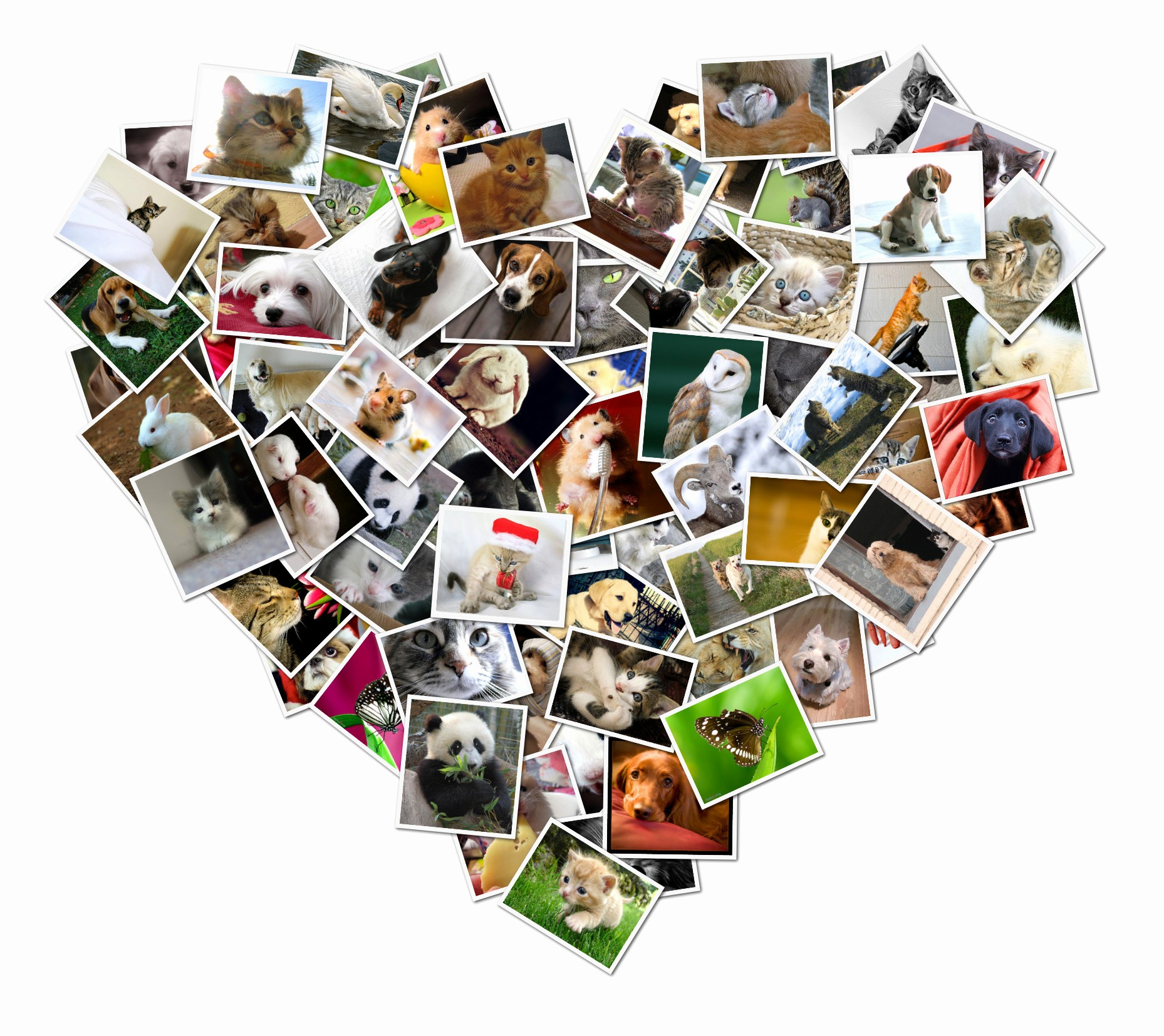 Microsoft Word Photo Collage Template Best Of Shapecollage Fers Digital Collage Gift Ideas