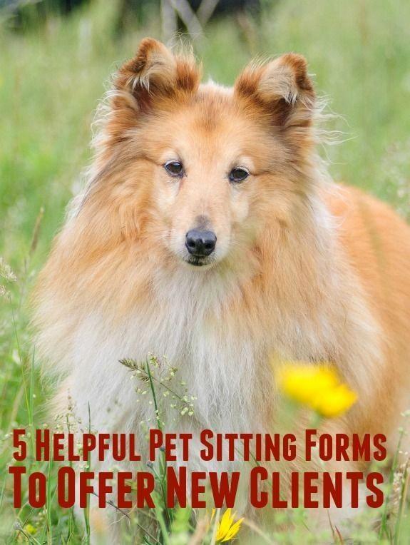 Pet Sitting Client Information form Best Of Best 25 Pet Sitting Ideas On Pinterest