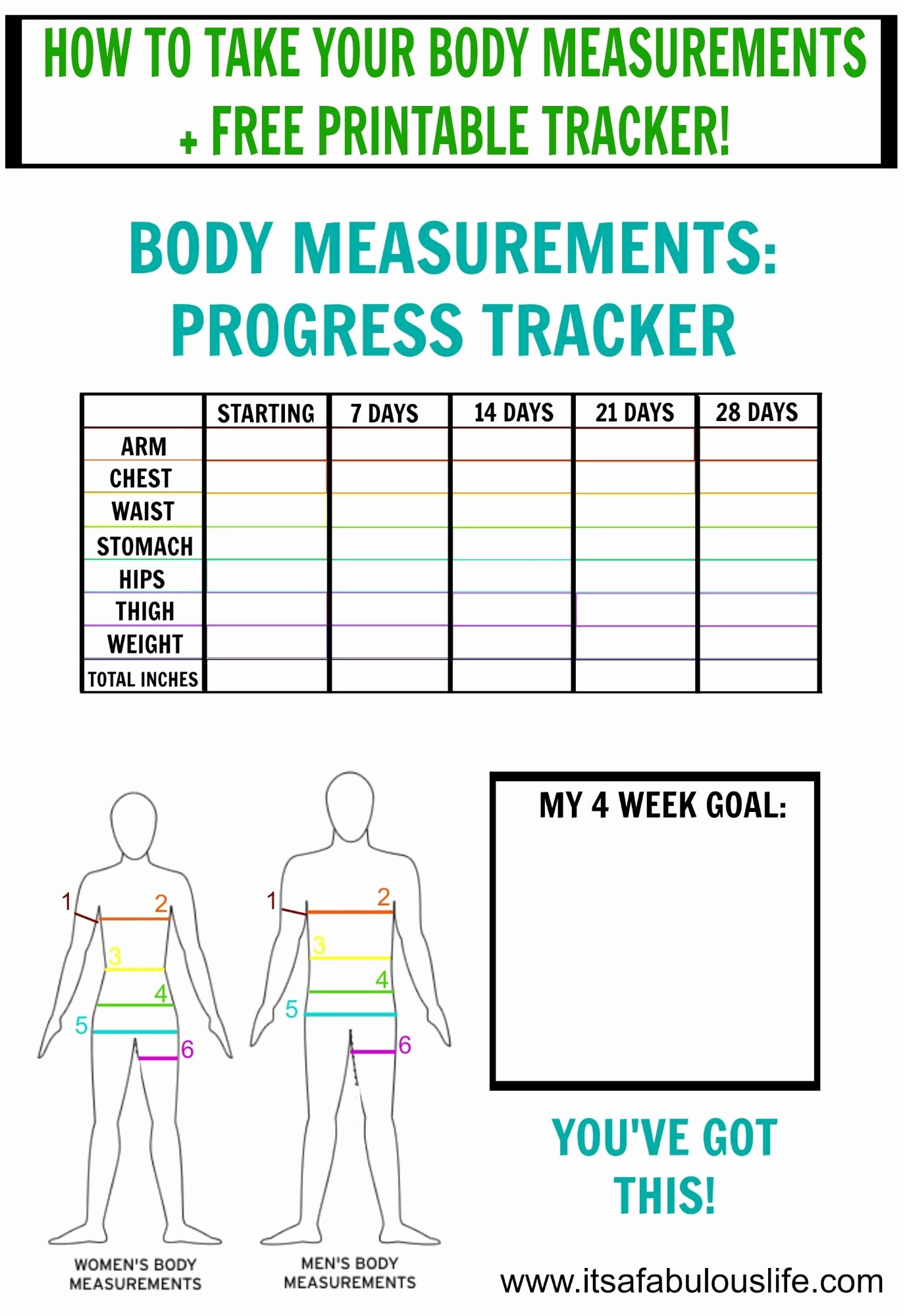 Printable Weight Loss Measurement Chart New How to Take Your Body Measurements Free Printable Tracker