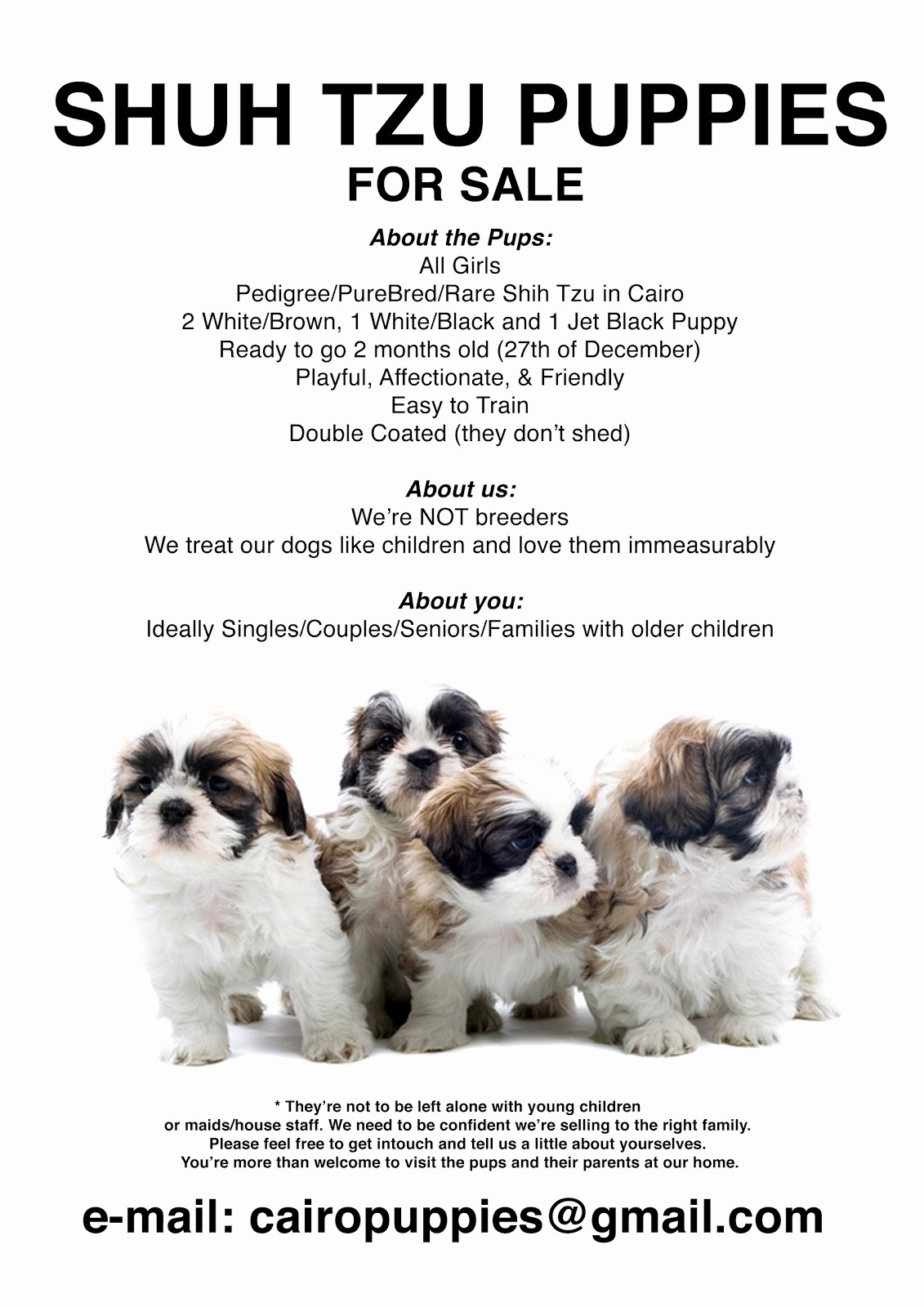 Puppies for Sale Flyer Template Fresh Shih Tzu Puppies for Sale Flyer & Info