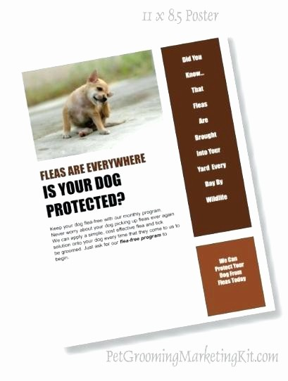 Puppy for Sale Flyer Templates Awesome Dog Grooming Flyers Template Referral Coupon Template Pet