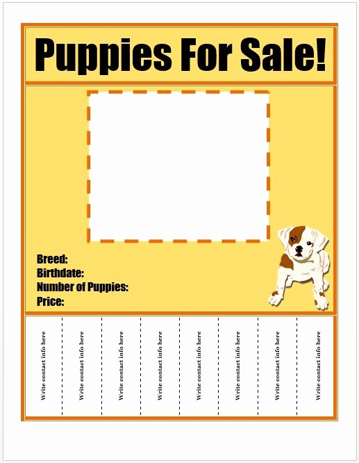 Puppy for Sale Flyer Templates Awesome Flyers Puppies for Sale and Flyer Template On Pinterest