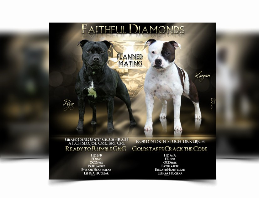 Puppy for Sale Flyer Templates Fresh Breeder Webdesign Dog Kennel Design Best Dog Breeder