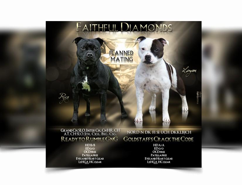 Puppy for Sale Flyer Templates Fresh Breeder Webdesign Dog Kennel Design Best Dog Breeder