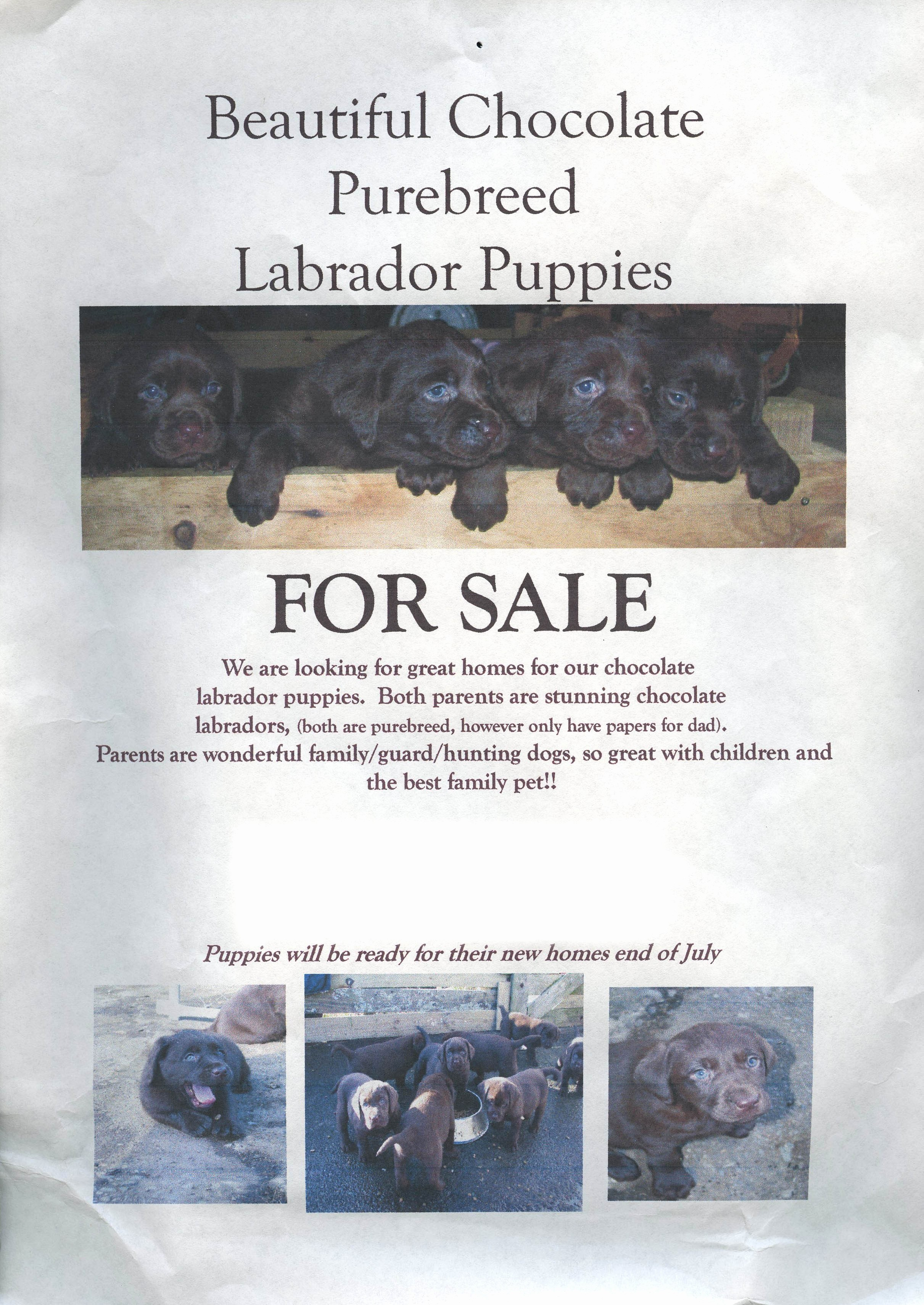 Puppy for Sale Flyer Templates Fresh Puppy Link to Killing Explored