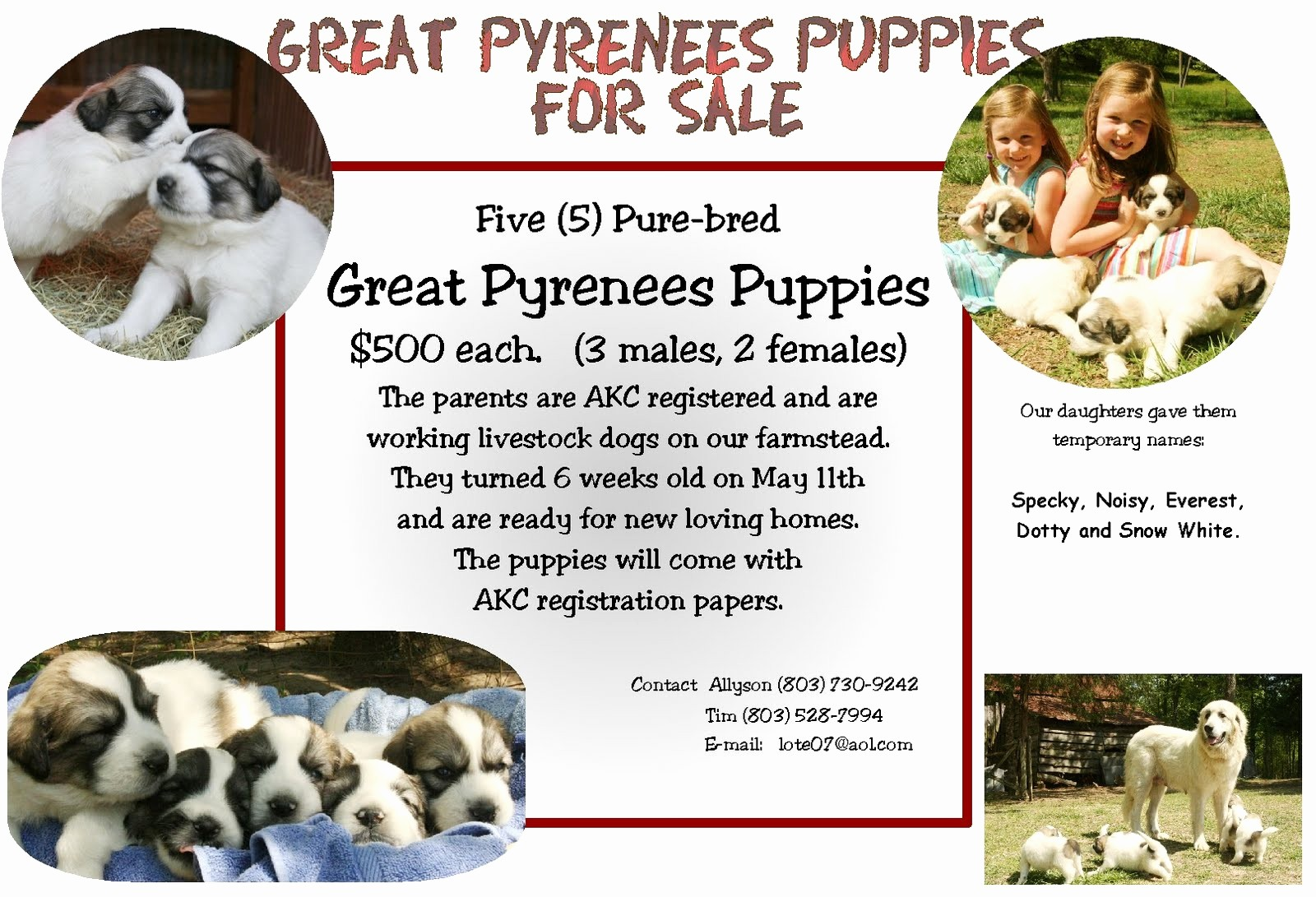 Puppy for Sale Flyer Templates New Till We there Puppies for Sale