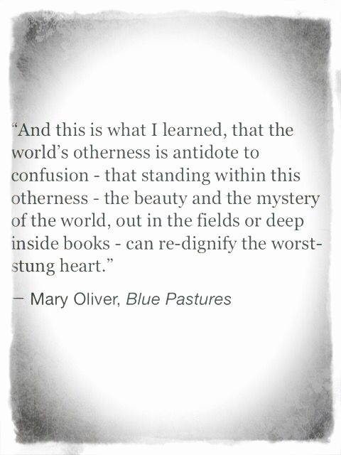 Quotes with the Word Blue Beautiful Mary Oliver Blue Pastors Quote Words Of Wisdom