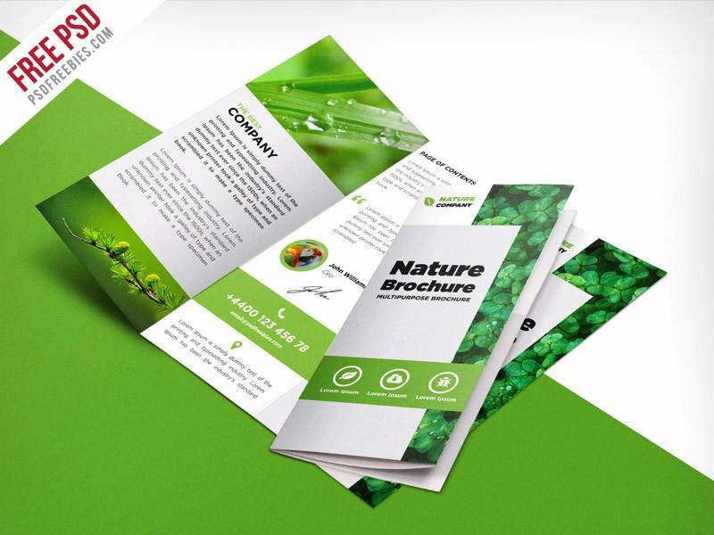 School Brochure Template Free Download Beautiful Nature Tri Fold Brochure Template Free Psd