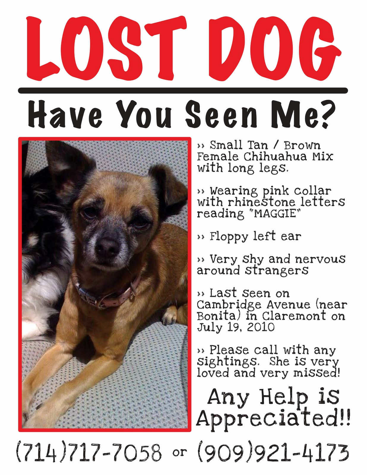Missing Dog Flyer Template Awesome Claremont Insider Lost Dog