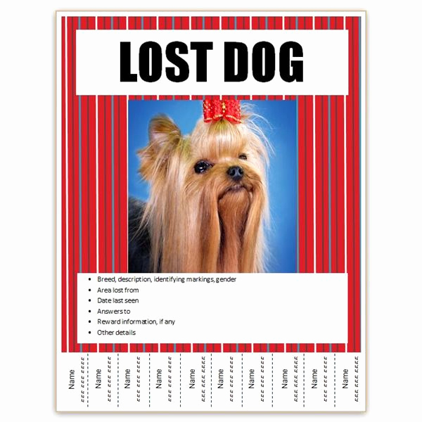 Missing Dog Flyer Template Awesome Find Free Flyer Templates for Word 10 Excellent Options