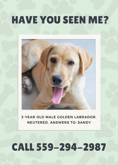 Missing Dog Flyer Template Awesome Pale Green Polaroid Frame Lost Dog Flyer Templates by Canva
