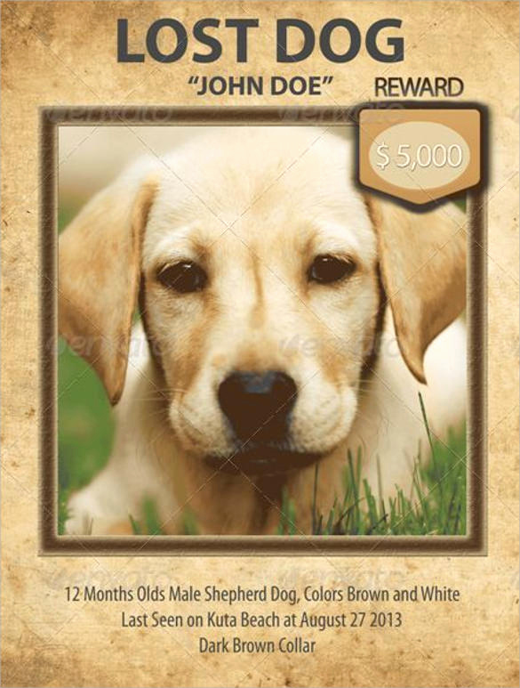 Missing Dog Flyer Template Beautiful 8 Lost Dog Flyer Templates