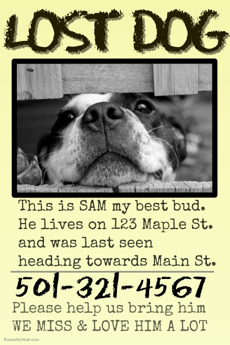 Missing Dog Flyer Template Best Of Copy Of Missing Pet Lost Dog Cat Family