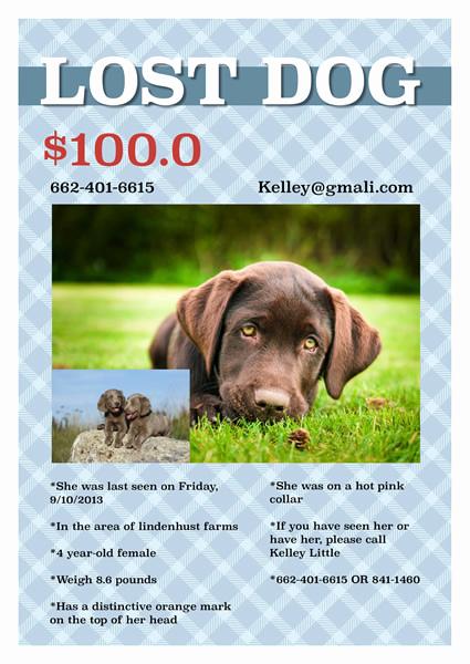 Missing Dog Flyer Template Best Of Flyer Templates & Samples