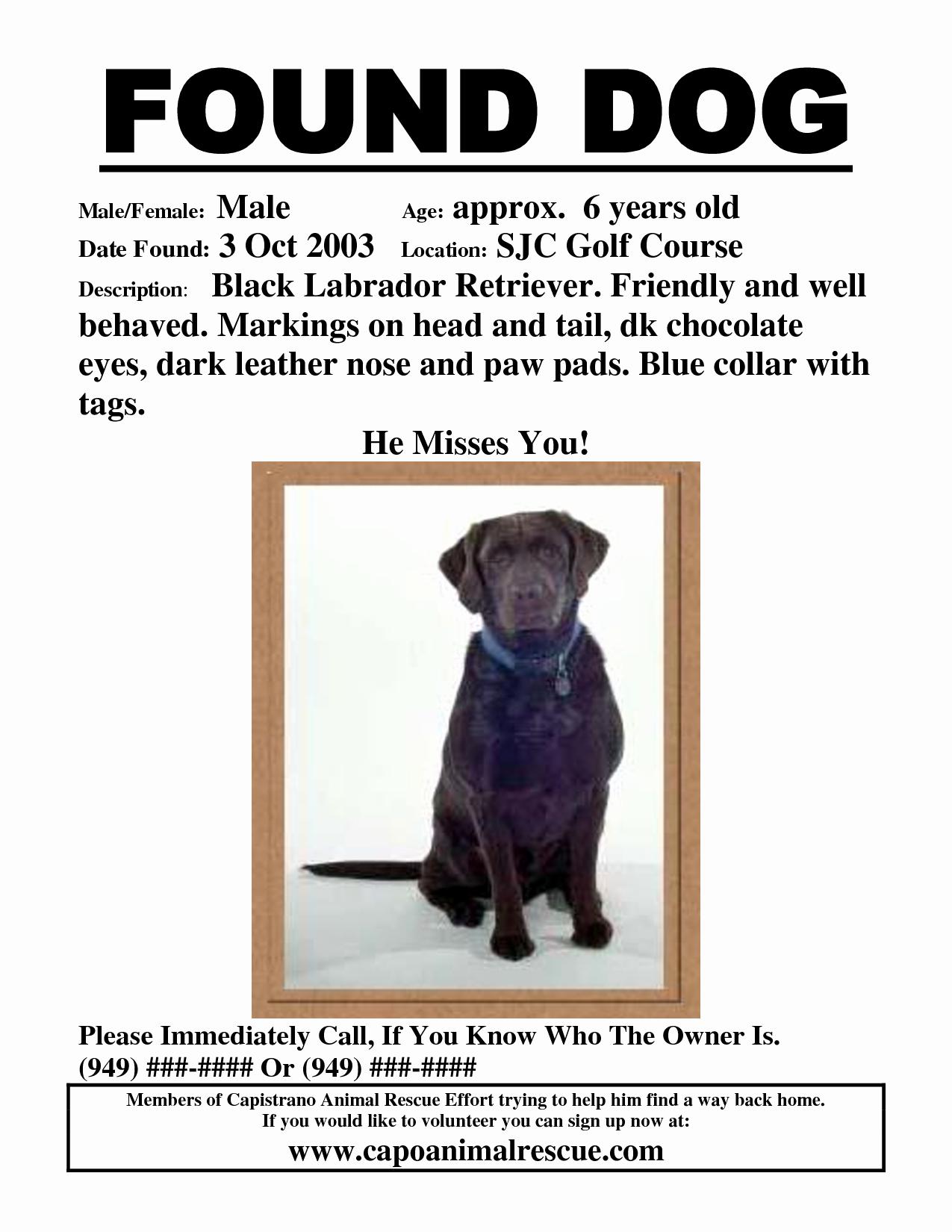 Missing Dog Flyer Template Best Of Found Dog Poster Template Portablegasgrillweber