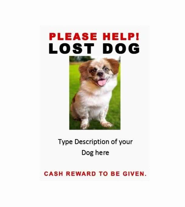 Missing Dog Flyer Template Inspirational 40 Lost Pet Flyers [missing Cat Dog Poster] Template