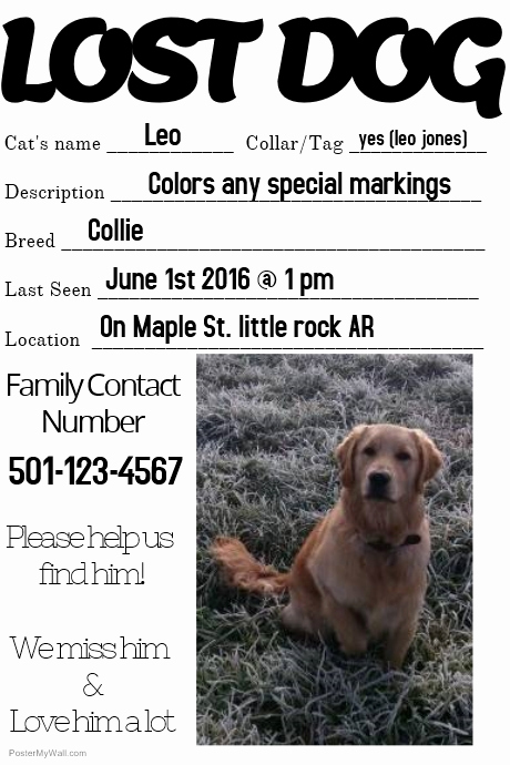 Missing Dog Flyer Template Luxury Lost Dog Missing Loved One Family Template