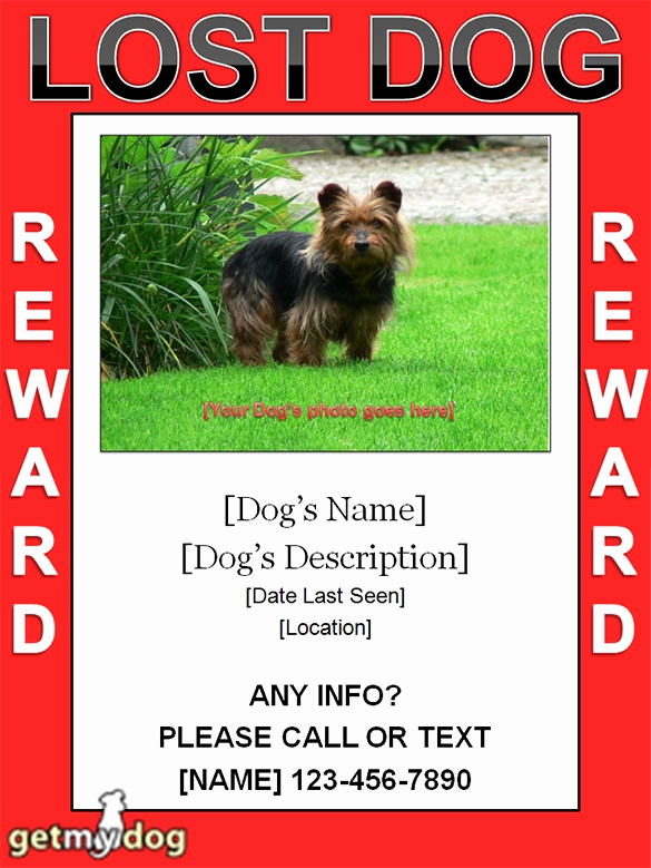 Missing Dog Flyer Template Luxury Missing Dog Template Invitation Template